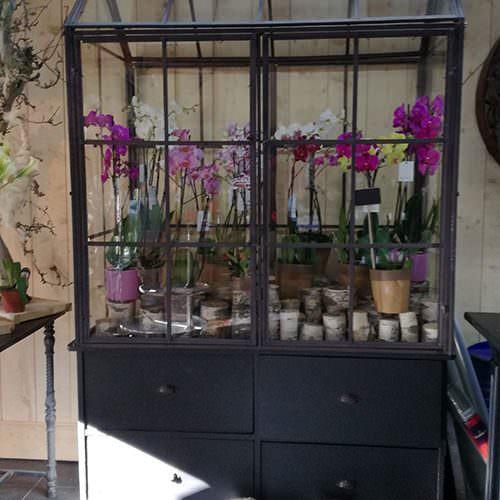 plantes-jardin-500×500