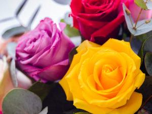 Roses Multi